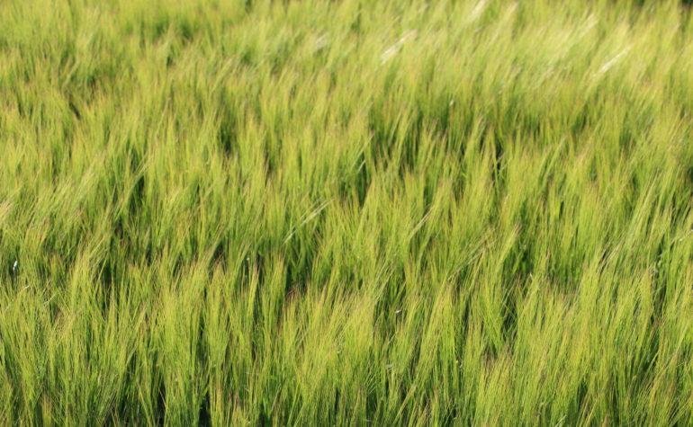 Мой шведский дневник: Фермер-деспот или финальные аккорды моей заграничной практики